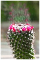 Die ersten Blüten 2
