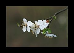 Die ersten Blüten am Baum