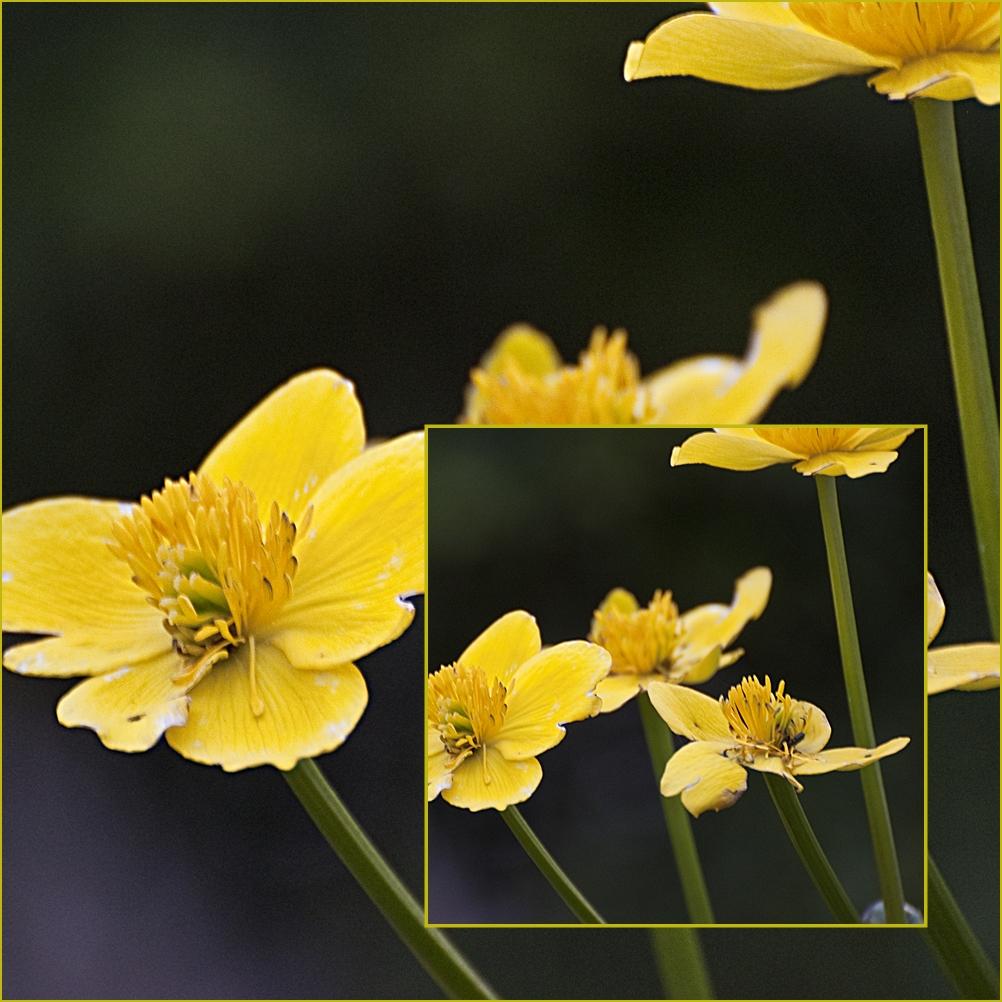 die ersten Blüten am Teichrand