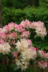 die ersten Blüten dieses Jahr