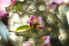 Die ersten Blüten.....