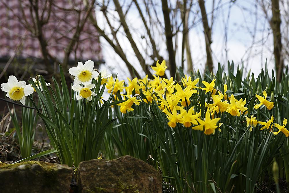 Die Ersten Blumen Foto Bild Jahreszeiten Fruhling Gelb Bilder