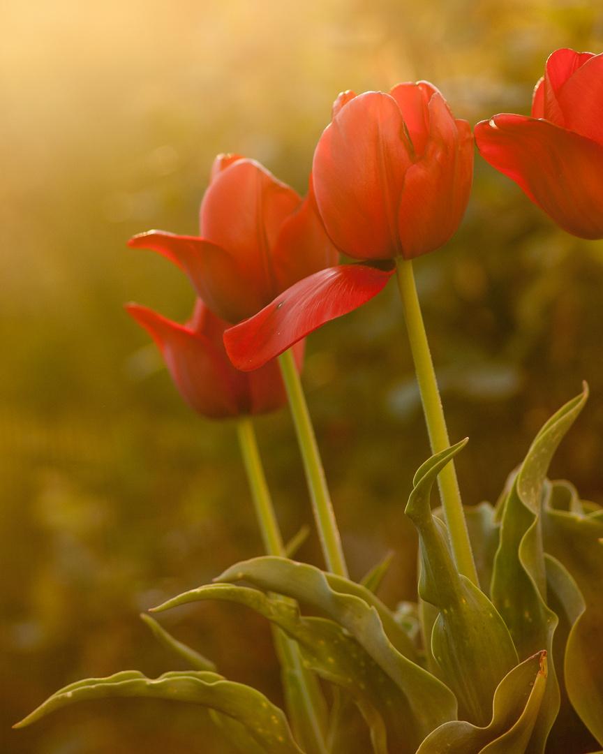 Die ersten Blumen