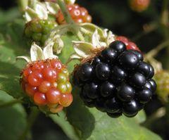 Früchte • Samen