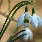 Die ERsten dieses Frühlings....