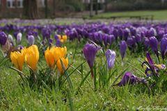 Die ersten Frühlingsboten 2007 - Nr. 2