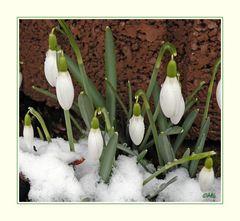 Die ersten Frühlingsboten...