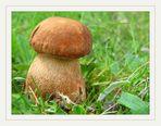 Die ersten Pilze..