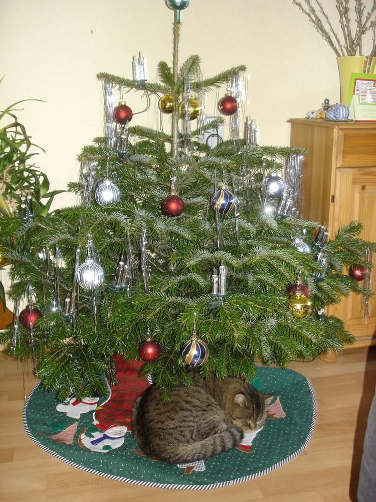 Die ersten Weihnachtsgeschenke sind schon unterm Baum...... Foto ...