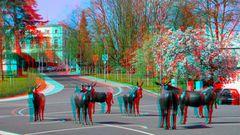 Die Esel in unserer Stadt