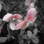 die etwas anderen Blüten