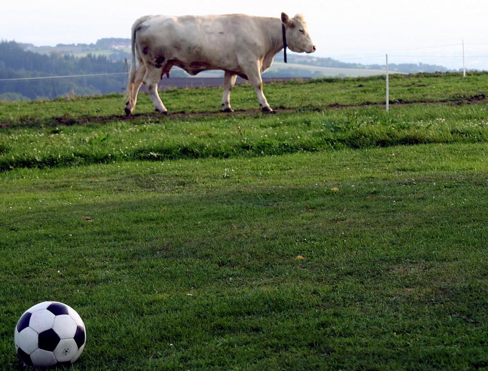 Die EURO 2008 wirft ihre Schatten voraus ...