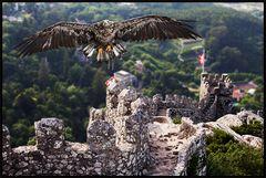 die Falkner - Burg