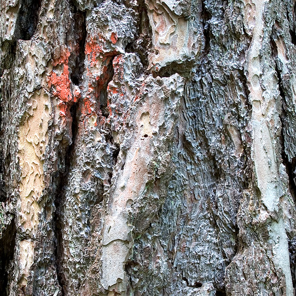 Die Falten des Baumes