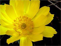 Die Farbe des Frühlings