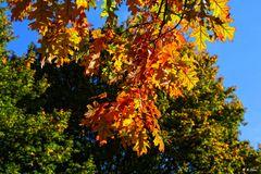Die Farbe des Herbst