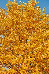 Die Farbe des Herbstes.......
