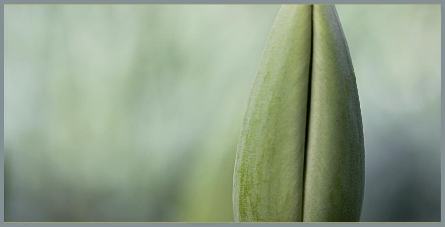 die farbe gelb foto bild pflanzen pilze flechten. Black Bedroom Furniture Sets. Home Design Ideas