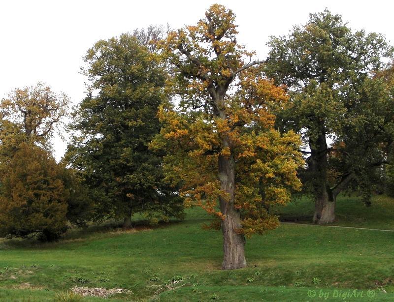 Die Farbe Herbst 07