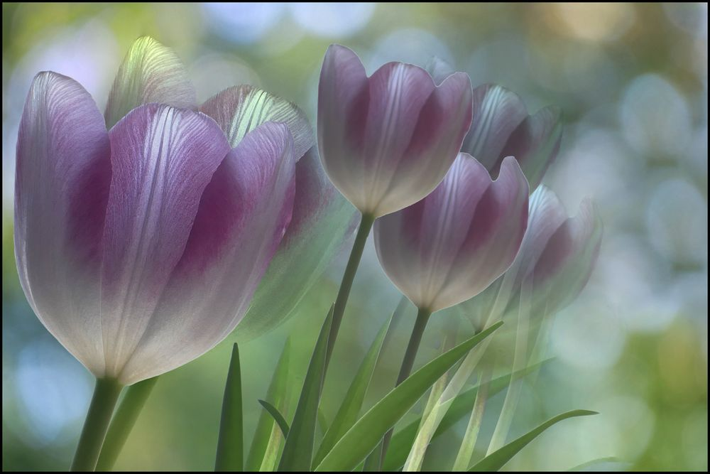 die farbe lila....