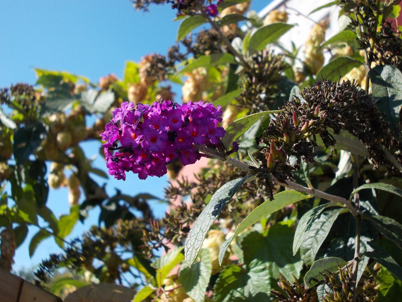 die farbe lila no 2