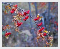 die farben der früchte ....