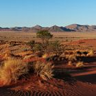 Die Farben der Namib