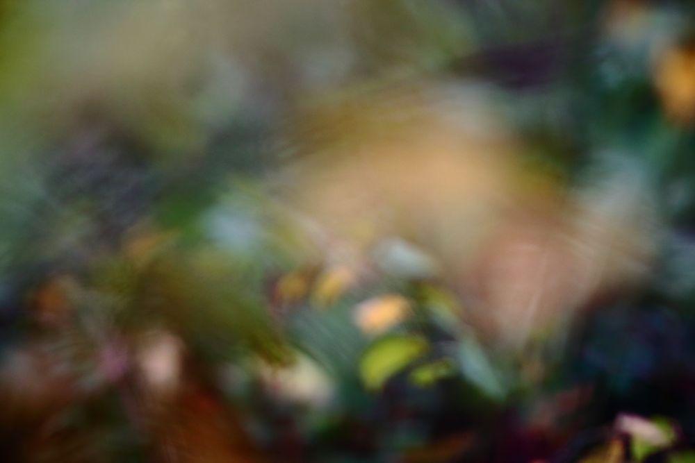 Die Farben des aufkommenden Herbstes