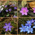 die Farben des Frühling