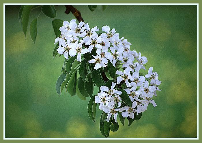 Die Farben des Frühlings.............