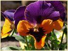 Die Farben des Frühlings