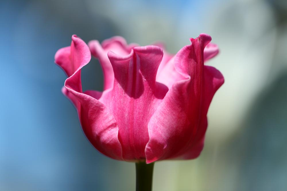 die farben des fr hlings foto bild pflanzen pilze flechten bl ten kleinpflanzen. Black Bedroom Furniture Sets. Home Design Ideas
