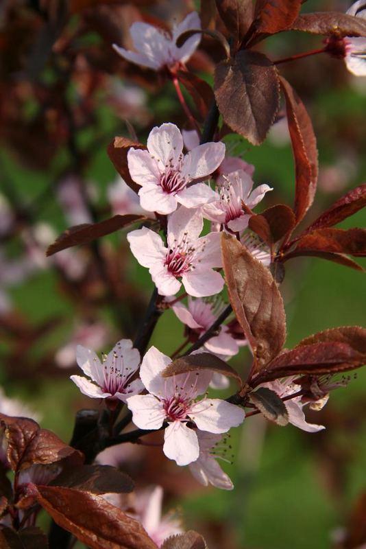 Die Farben des Frühlings...