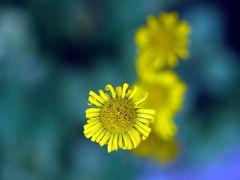 Die Farben des Frühlings (I)