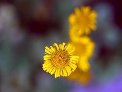 Die Farben des Frühlings (II)