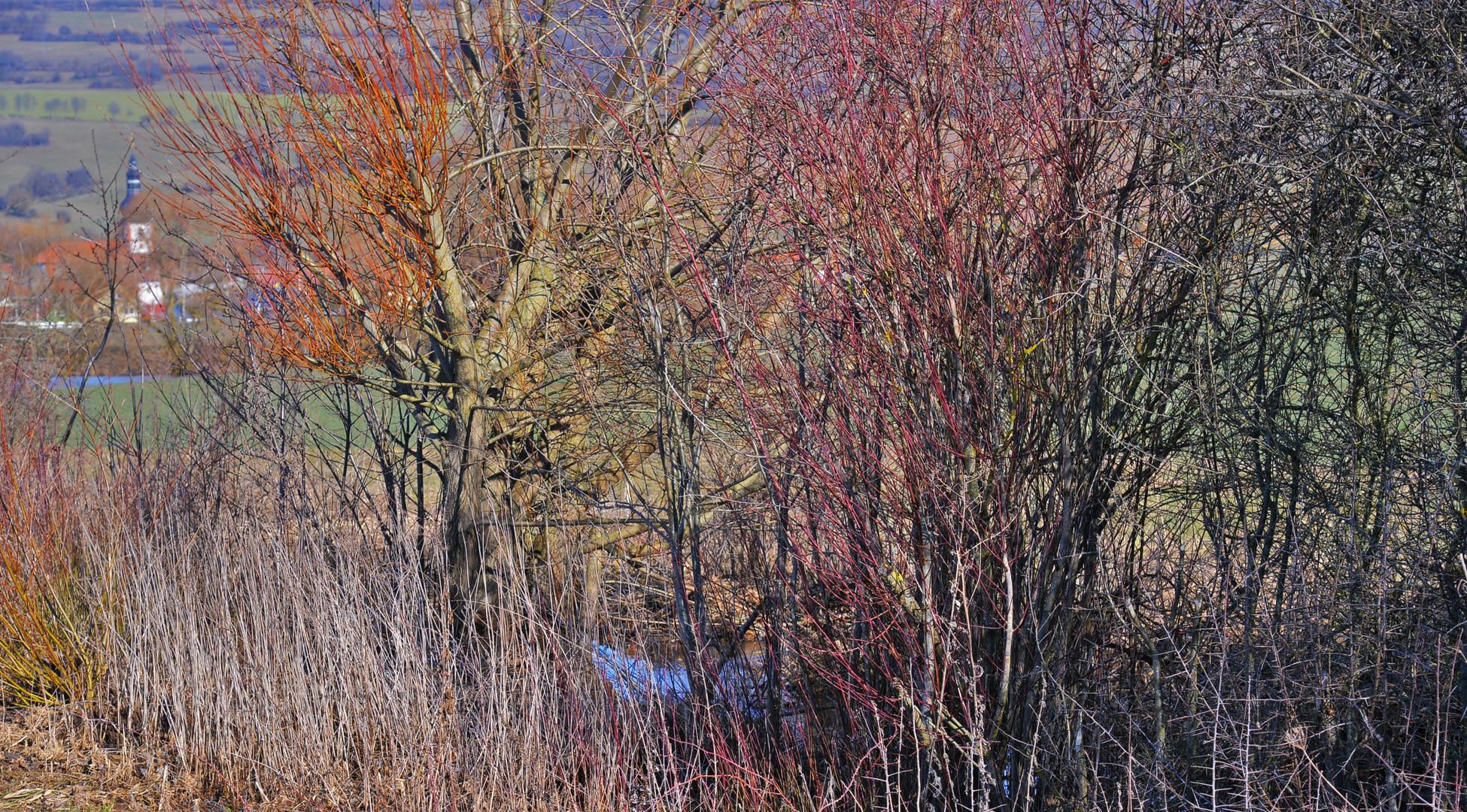 die Farben des Frühlings (los colores de la primavera)