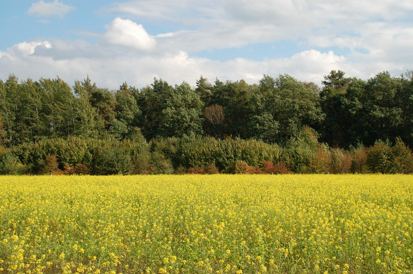 Die Farben des Herbstes (1)