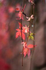 Die Farben des Herbstes 3.