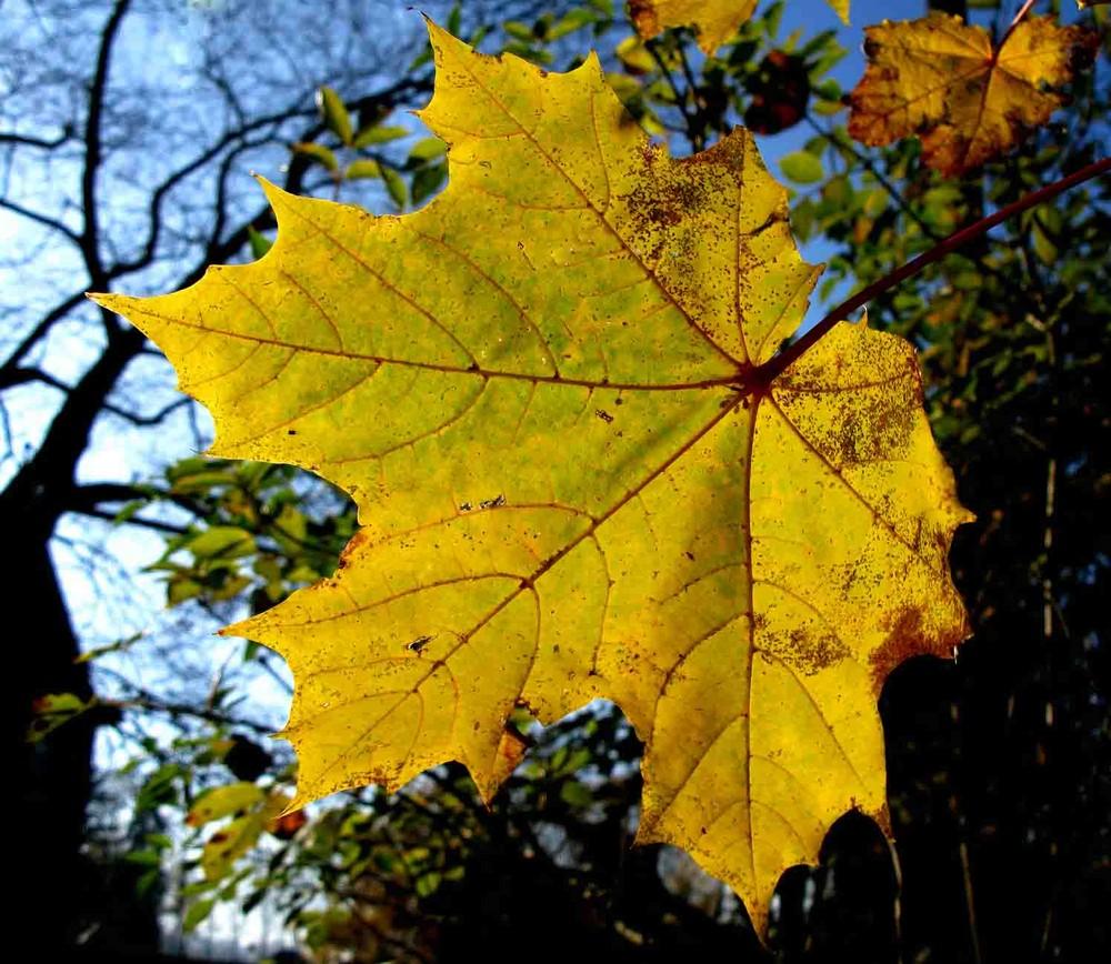 Die Farben des Herbstes...