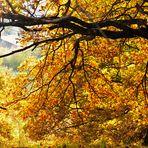 Die Farben des Herbstes 5