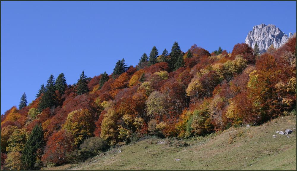 ...die Farben des Herbstes...
