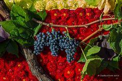Die Farben des Herbstes auf dem Winzerfest