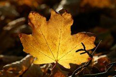 .. die Farben des Herbstes ...