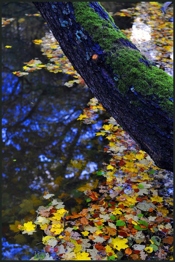 Die Farben des Herbstes I