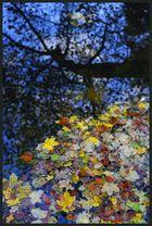 Die Farben des Herbstes II