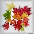 Die Farben des Herbstes_1