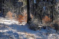 die Farben des Winterwaldes