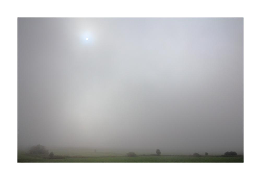 Die Farben im Grau... - oder: hinter diesem Nebel ist kein Winter...