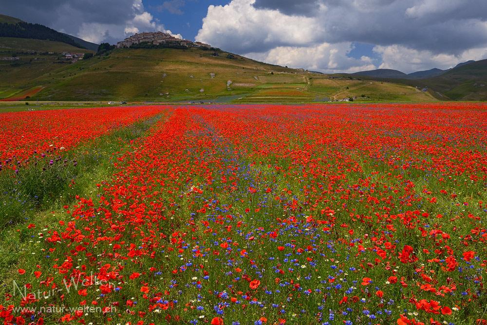 Die Farbenpracht von Castelluccio di Norcia