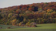 Die Farbenvielfallt war mit die intensivste Stelle im Böhmischen Mittelgebirge...